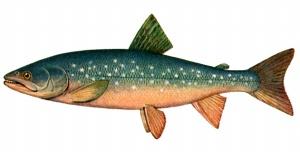 Статьи рыбалка виды рыб