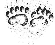 Следы зверей, как читать следы зверей, чьи следы, как узнать следы