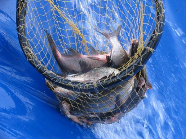 рыбалка в алешино пушкинский район 2016