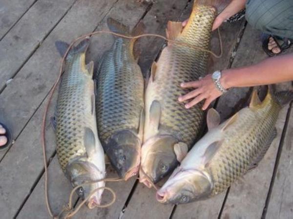 форель в свердловской области рыбалка