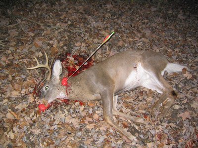 Статьи охотничье оружие основы