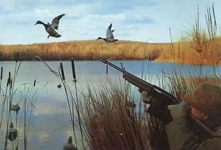 Картинки позапросу охота наводоплавающую дичь